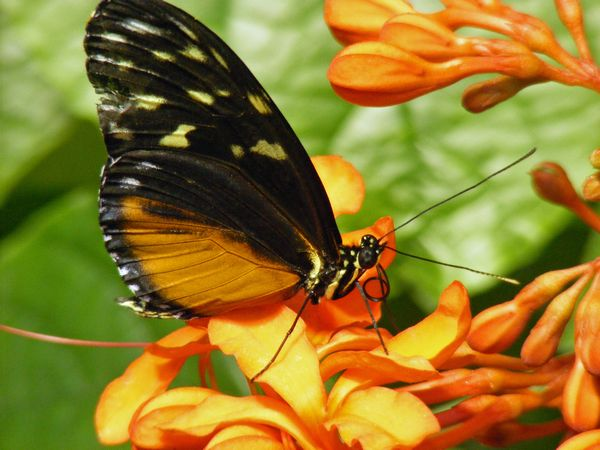 image of a butterfly on an orange flower