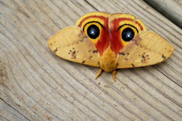 image of a colorful moth