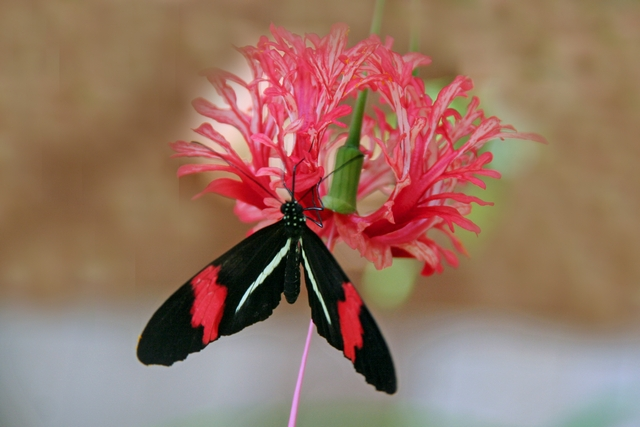 image of a butterfly on a pink flower